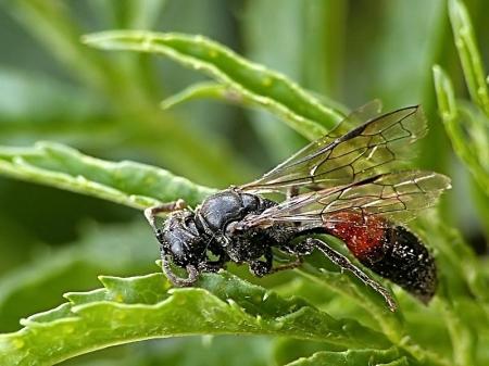 Nowa Gdynia 13.07.2011 Martwa samica zaplątana w pajęczej sieci
