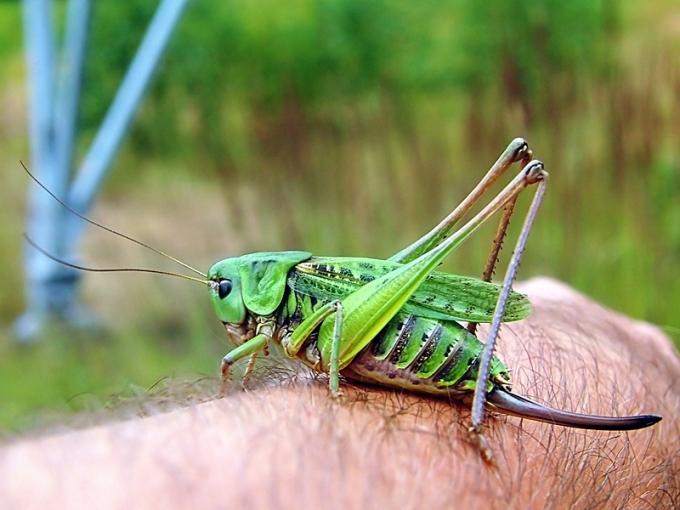Widzew 18.07.2010 Tu widać, jak duży to owad