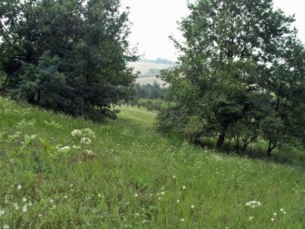 Murawy Dobromierskie 29.07.2012 Spilomyiowisko