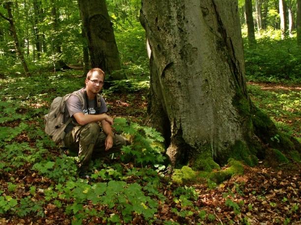 Bukowa Góra 29.07.2012 Łukasz Mielczarek monitoruje bukową dziuplę , w której rozwijały się larwy Spilomyia diophtphalma