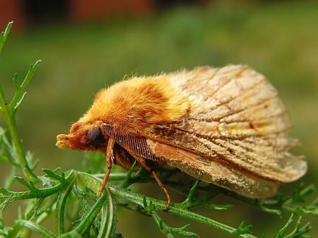 Las wiączyński 21.07.2010 Motyl przypomina mi prosiaczka