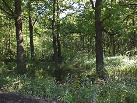 Biotop - las koło Moszczenicy