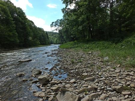 Potok Wołosate – na kamienistym brzegu licznie biegały Bembidiony i żarlinki