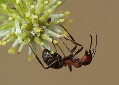 Widzew 13.04.2012 Wiosną robotnice chętnie i licznie wdrapują się na kwitnące wierzbowe bazie oferujące pyłek i nektar