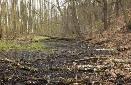 Habitat - Struga Dobieszkowska w kwietniu