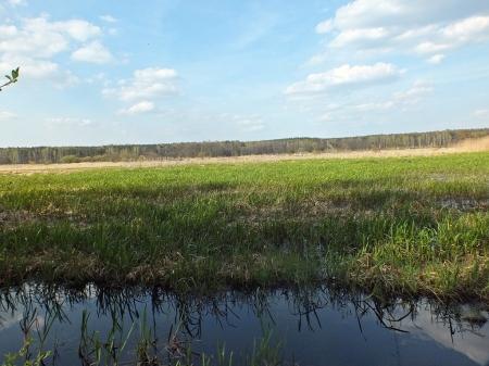 Łąki zalewowe nad Pilicą