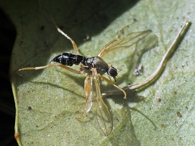 Łódzki Ogród Botaniczny 03.06.2015 Martwa samica znaleziona na liściu