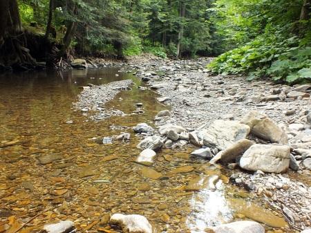 Bystre - Czerwiec 2015 Kamienisty brzeg potoku to typowy biotop gatunku