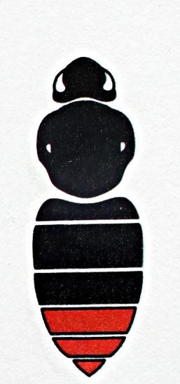 B.lapidarius - Samica