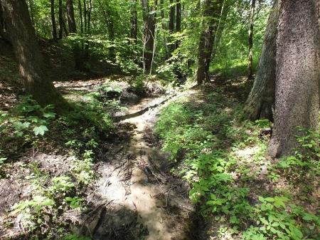 Las Łagiewnicki w czerwcu - Habitat