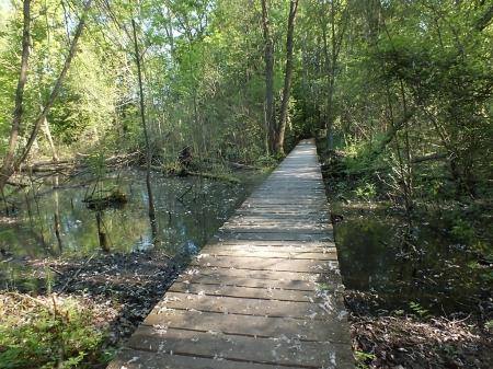 Fragment ścieżki edukacjnej na terenie Parku Narodowego