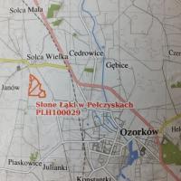 Słone Łąki w Pełczyskach - Ostoja bałamutków