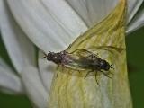 Łódzki Ogród Botaniczny 08.05.20016