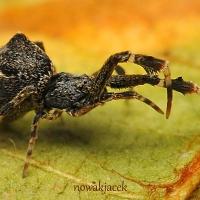 Araneae + Opiliones