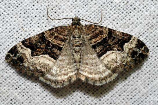 x.biriviata